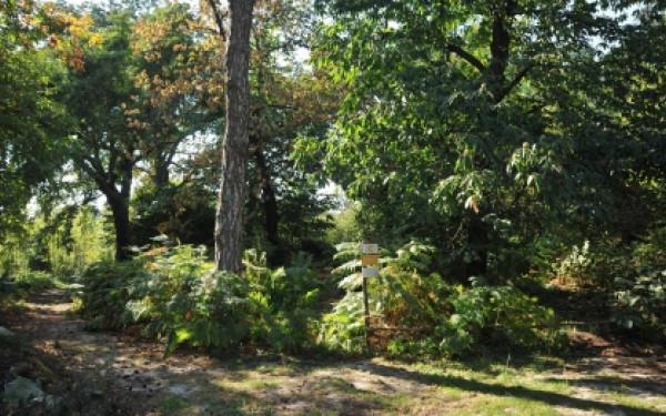 Jardin Ecologique - Visite guidée (mardi ou jeudi)