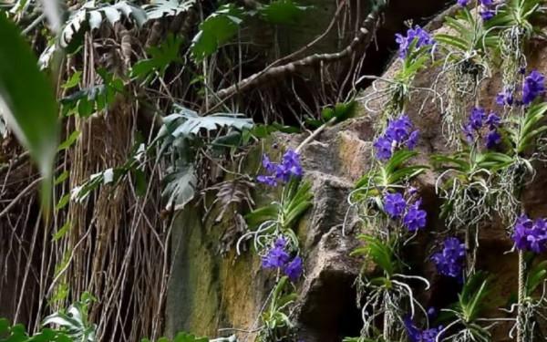Épiphytes, immersion dans la forêt tropicale
