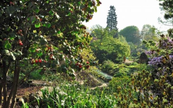 Jardin Alpin - Visite guidée (mardi ou jeudi)